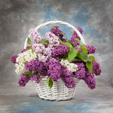 Spring bouquet. Lily of the valley and lilac in a basket.  Royalty Free Stock Photography