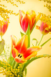 mimosa and tulips Stock Photography
