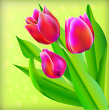Spring bouquet of tulips Stock Image