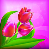 Spring bouquet of tulips Stock Photos
