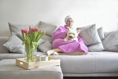 Bouquet of tulips and in the background a sleeping woman with a white dog stock image