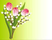Spring bouquet. Tulips and willow. Vector Royalty Free Stock Photos