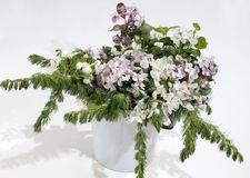 Spring bouquet of a white bird cherry Royalty Free Stock Photography