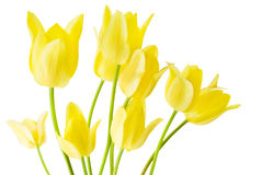 Spring bouquet of yellow tulips Stock Image
