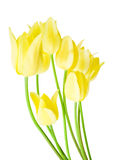 Spring bouquet of yellow tulips Royalty Free Stock Photo