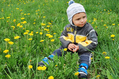 Boy in dandelions Royalty Free Stock Photos