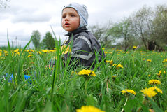 Boy in dandelions Stock Photo
