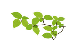 Spring branch Stock Photography