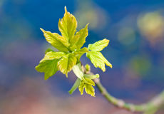 Spring Branch Stock Images