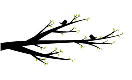 Spring branch. With early levels and cheerful birds Royalty Free Stock Photography