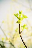 Spring branch stock photos