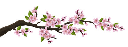 Spring branch banner with cherry flowers. Spring branch banner with realistic pink cherry flowers and leaf, isolated on white Stock Photo
