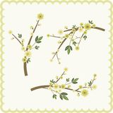 Spring branch design set Stock Photography