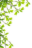 Spring branch frame Stock Images