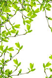 Spring branch frame Royalty Free Stock Images