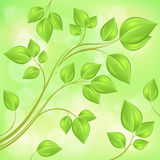 Spring branch with fresh leaves on green Stock Photography