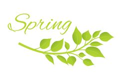 Spring and Tree Branch with Green Leaves on Poster Stock Photo