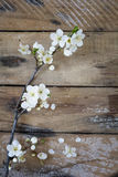Spring branch on  table Royalty Free Stock Photography