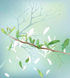 Spring branch. This is vector Illustration of branch and leaf Stock Photography