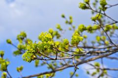 Spring Branches Royalty Free Stock Photo