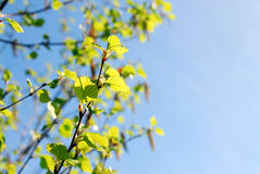 Spring branches Stock Photography