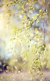 Spring branches of a birch lit with the sun. Royalty Free Stock Photos