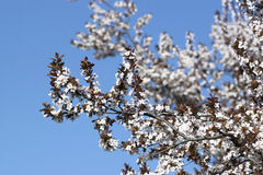 Spring - RAW format Royalty Free Stock Photography