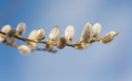 Spring branches Royalty Free Stock Images