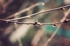 Spring Branches with Drops Stock Photography
