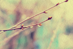 Spring Branches with Drops Royalty Free Stock Photos
