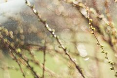 Spring branches on a tree with swollen buds and small green leaves, selective focus, bokeh, soviet lens Helios 44-2. Spring branches on a tree with swollen buds stock image