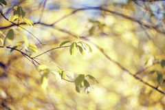 Spring branches of trees in the afternoon. Stock Images