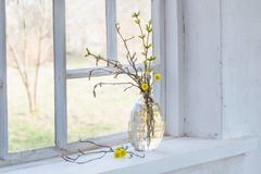 Spring branches in vase on windowsill. Spring branches in vase on old windowsill stock photo