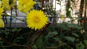 Spring break. Happy spring season break peace nature flowers sunflower stock image