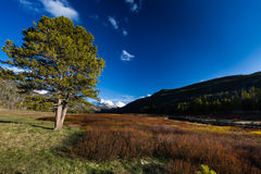 Spring breaks in the Uinta's. This photo was taken in Christmas Meadows in Utah Royalty Free Stock Photography