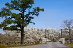 Spring Bridge Royalty Free Stock Photography
