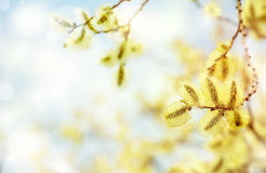 Spring bright background Stock Photography