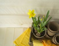 Spring. Bright Easter. Flower transplantation. Basket with pots and flower. Wood background. Napkins, gloves and tools. Colors are orange, yellow, green, brown Stock Photo