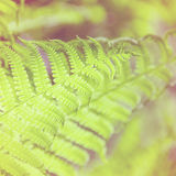 Spring bright green fern Stock Photo