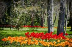 Spring Bright Tulips stock photo