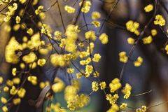 The spring brings an explosion of colors and wonderful flowers Royalty Free Stock Photography