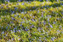 The spring brings an explosion of colors and wonderful flowers Stock Photography