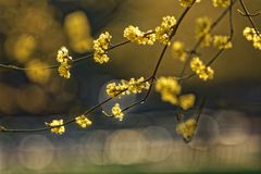 The spring brings an explosion of colors and wonderful flowers Stock Photos
