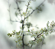 Spring brings new life, blooming on branches Stock Photography