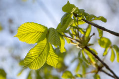 Spring. Royalty Free Stock Photos
