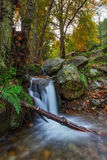 Spring Brook flows down on a log. In Portuguese forest Monchique. Royalty Free Stock Image