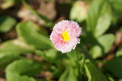Spring @ The Brooklyn Botanic Garden 99 Part 3 49. Brooklyn Botanic Garden is an urban botanic garden that connects people to the world of plants, fostering Royalty Free Stock Photography