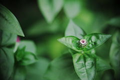 Spring Bud. Flowers budding, Composition of nature Royalty Free Stock Photography