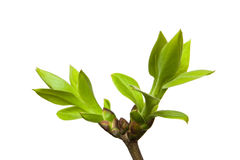 Spring bud Stock Photography