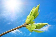 Spring bud. Stock Photos